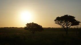 Półmrok w Południowa Afryka Obraz Royalty Free