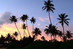 Półmrok w zwrotnikach z sylwetkami drzewka palmowe przeciw s zdjęcie royalty free