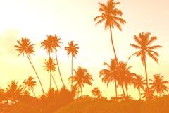 Półmrok w zwrotnikach z sylwetkami drzewka palmowe przeciw s zdjęcia royalty free