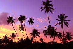 Półmrok w zwrotnikach z sylwetkami drzewka palmowe przeciw s zdjęcia stock