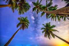 Północ krajobraz z kokosową drzewko palmowe sylwetką i Milky sposób w niebie obraz stock