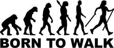 Północna Chodząca ewolucja ilustracja wektor