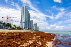 Północna Miami plaża Zdjęcia Royalty Free
