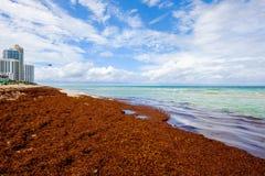Północna Miami plaża Obraz Royalty Free