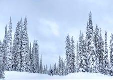 Północna narta blisko Kelowna przy Dużym Białym ośrodkiem narciarskim na śnieżnym dniu fotografia royalty free