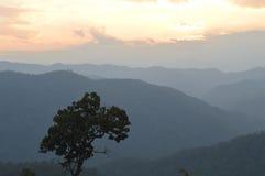 Północna Tajlandia dżungla Zdjęcie Stock