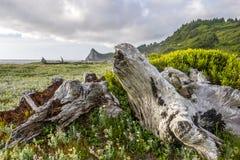 Północnego Kalifornia wybrzeże fotografia royalty free