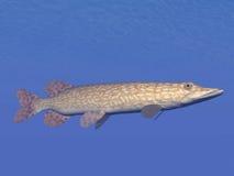 Północnego szczupaka ryba podwodna - 3D odpłacają się Obrazy Royalty Free
