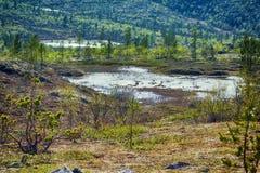 północny biegunowy halny tundra krajobraz fotografia stock
