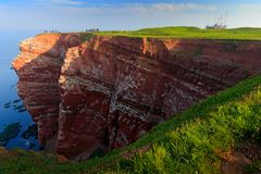 Północny gannet, Sula bassana, kolonia denni ptaki na czerwieni skale Gniazdujący czas na falezach z zmrokiem, - błękitna woda mo obrazy royalty free