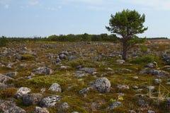Północny krajobraz Zdjęcia Stock