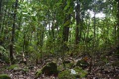 Północny Queensland tropikalny las deszczowy obrazy royalty free