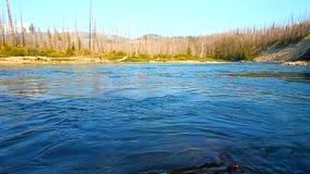 Północny rozwidlenie Flathead Rzeczny Montana zbiory wideo