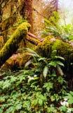Północny tropikalny las deszczowy Fotografia Royalty Free