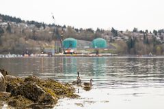 PÓŁNOCNY VANCOUVER, BC, KANADA, APR -, 09, 2018: Zbiornikowiec do ropy blisko Parkland tankuje rafinerię fotografia royalty free