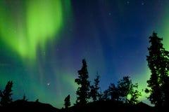Północnych świateł zorzy borealis zawijasów Yukon tajga Fotografia Royalty Free
