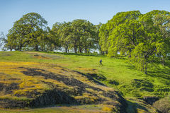 Północy Stołowa Halna Ekologiczna rezerwa, Oroville, Kalifornia fotografia royalty free