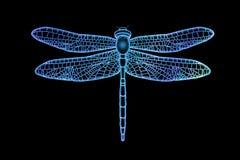 Półprzezroczysty Dragonfly Zdjęcie Royalty Free