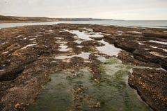 Półwysep De Valdes, puerto madryn, patagonia Argentina fotografia stock