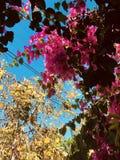 Półwysep Jukatan jest zalany z wiele krzepko kwiatami zdjęcie royalty free