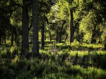 Późne Lato Sceniczny Cottonwood las w Południowym Kolorado Obraz Stock
