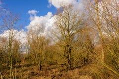 Późne Popołudnie w Wschodni Flandryjskim Obraz Royalty Free
