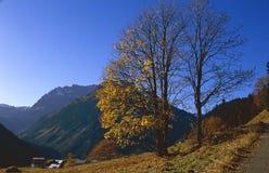 późnego października nagi drzewo Obrazy Royalty Free