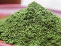 Pó do Verde-chá Imagem de Stock