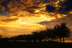 półmrok drzewa Fotografia Stock