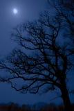 północ drzewo Obrazy Royalty Free
