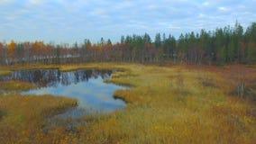 północna natura zbiory