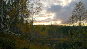 północna natura zbiory wideo