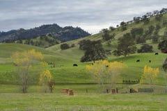 Północnego Kalifornia westernu pogórza Zdjęcia Royalty Free