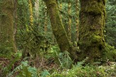 Północnego zachodu tropikalny las deszczowy Zdjęcia Stock