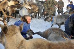 Północni aborygeny Rosja Yamal Nadym Fotografia Stock