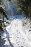 Północny Eifel las W zimie, Niemcy Obraz Royalty Free