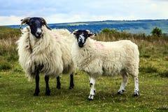 Północny Jork Cumuje, North Yorkshire, Anglia Zdjęcie Stock