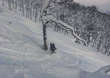 Pó profundo de esqui do esquiador na floresta nevado Foto de Stock Royalty Free