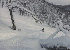 Pó profundo de esqui do esquiador na floresta nevado fotos de stock royalty free