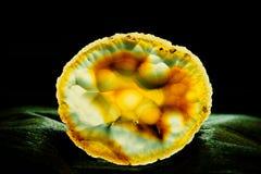Półprzezroczysty plasterek agata kwarcowy sylikatowy klejnot Fotografia Stock