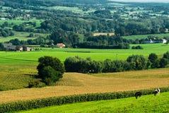 pól uprawnych krajobrazu Zdjęcia Royalty Free