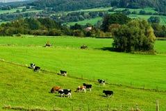 pól uprawnych krajobrazu Zdjęcia Stock