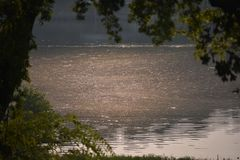 Pólen no lago Foto de Stock Royalty Free