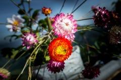 Pólen vermelho, amarelo, cor-de-rosa e branco da flor ainda vivo no ramo da planta Foto de Stock Royalty Free