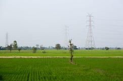 Pôles de l'électricité dans le domaine de riz Photos libres de droits