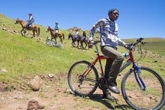 Pônei que trekking em Lesoto perto de Semonkong Ciclista do local dos jovens Imagem de Stock Royalty Free