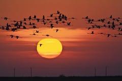Pôr-do-sol Fotos de Stock Royalty Free
