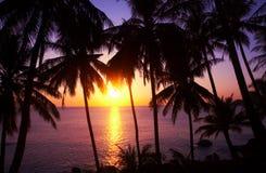 Pôr-do-sol e palmas Imagens de Stock