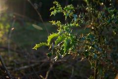 Pôr do sol nesta floresta bonita Fotos de Stock Royalty Free