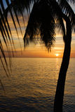 Pôr-do-sol tropical Imagem de Stock